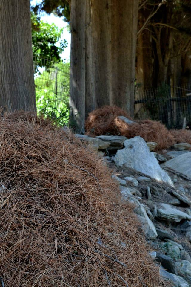 piles of pine-needles for Martha Dimitropoulou's installation